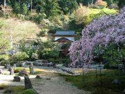 しだれ桜と庭