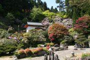 石楠花と庭