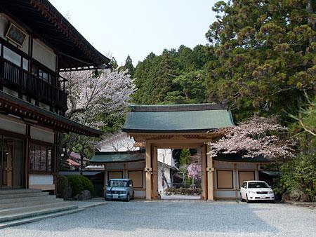 山門の山桜