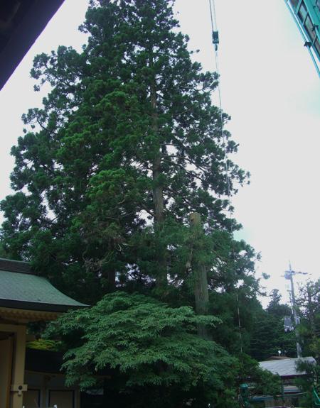 山門脇の3本の杉