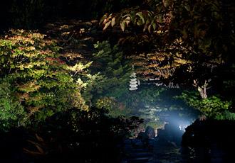お庭のライトアップ