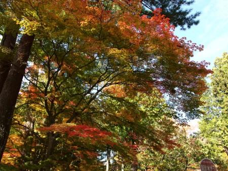 伽藍裏付近の紅葉